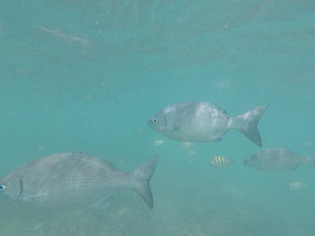 Snorkeling, Isla mujeres, Mexique