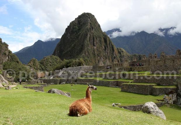 Grande place du Machu Picchu, Pérou